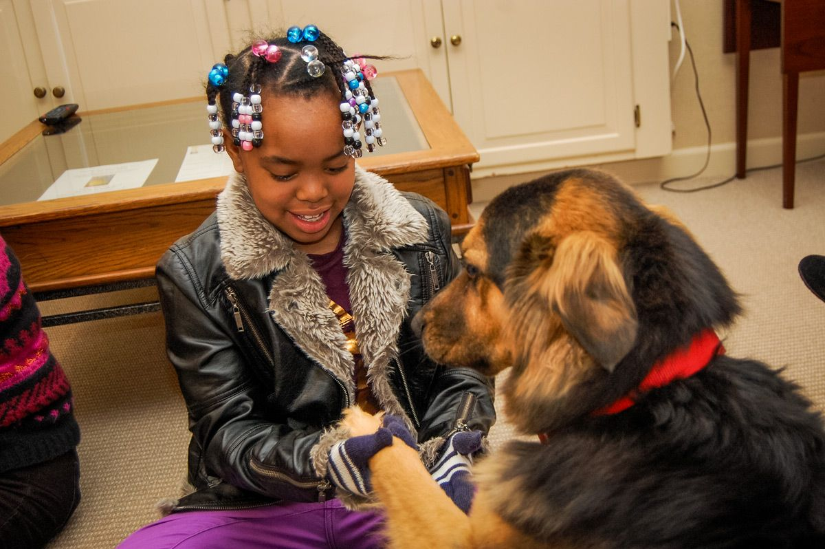 Pet Therapy Dogs